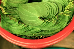 New leaf – betel leaf
